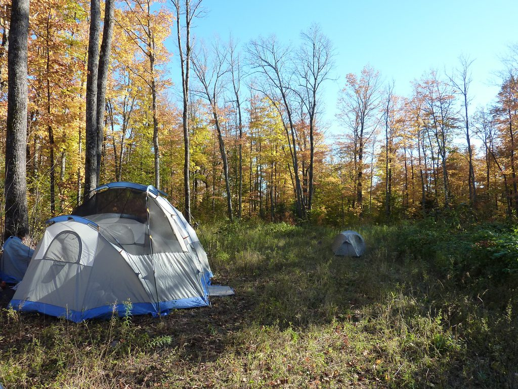 Tents Pitched With Tree Cover
