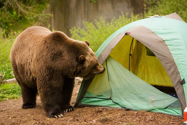 5 Essential Camp Safety Tips for the Outdoors